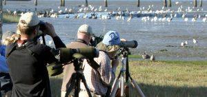 enjoying-wildlife-with-spotting-scopes